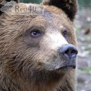 Реабілітаційний центр бурого ведмедя у Синевирі – факти з життя