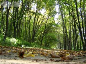 Полтавський парк