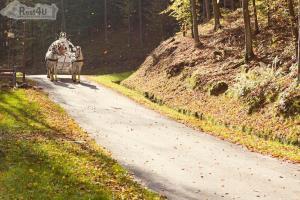 Відпочинок в Карпатах для романтиків - парк Шенборна