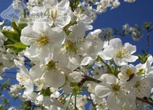 Акция «Весна в Отеле Калифорния»