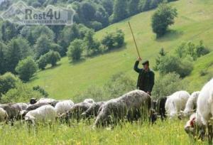Міжгірщина запрошує на традиційне вівчарське свято
